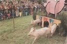Pig racing at La Jumelier